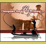 Cheseapeake Bay Fly Fishing